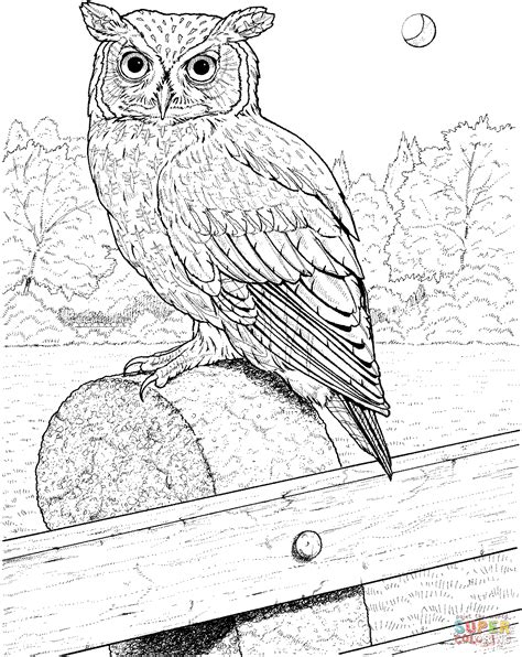 spotted owl coloring page great grey owl clipart spotted barn pencil and in color