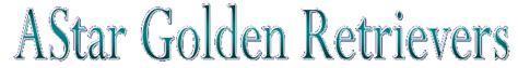 mainsail golden retrievers astar golden retrievers golden retrievers bridgewater ma