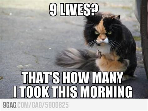 Angry Cat Meme Good - angry cat on 9 lives fun and more pinterest