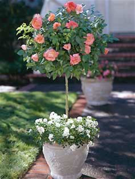 spring has me thinking about: tree roses decor to adore