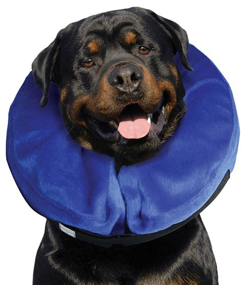 buster comfort collar inflatable collar buster newstead veterinary services