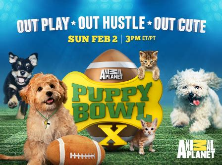 puppy planet tickets for animal planet s puppy bowl x in new york from showclix