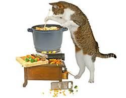 senior and kitten diets