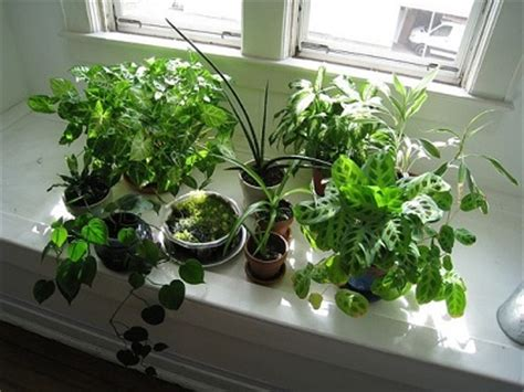 Best House Plants For Window Will Window Tint Kill My House Plants Pacific Window