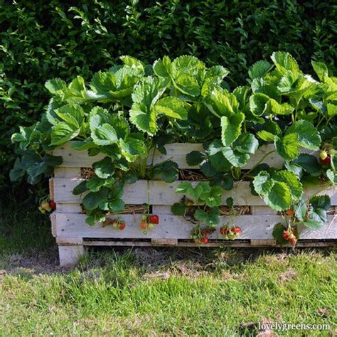 Strawberry Garden Ideas 9 Recycled Projects And Ideas For Your Garden Garden