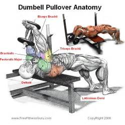 what muscles does benching work exercise of the week dumbbell pullover inspired by miranda