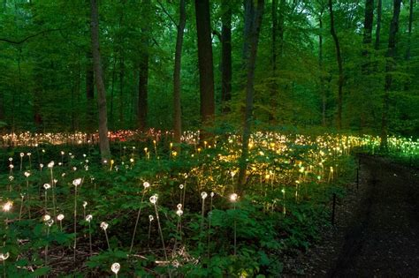gallery of bruce munro s stunning led installations light