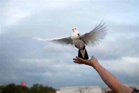 Tempat Pakan Burung Merpati perawatan tepat untuk mencegah penyakit pada burung