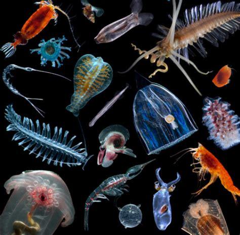 Plankton Images