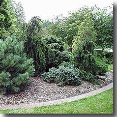 conifere nane da giardino treni da giardino piante