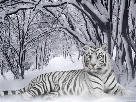Camouflage Home Decor by La Tigre Siberiana Animali Net
