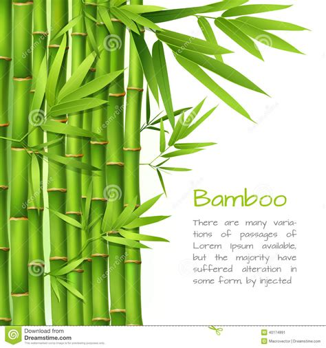 realistic bamboo background stock vector image 40174891