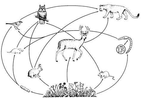 easy food web to draw food web