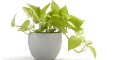 easy house plants want easy plants here are 20 super easy house plants