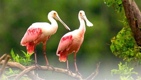florida birds alafia river watershed excursion