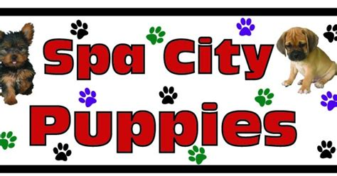 spa city puppies home www spacitypuppies