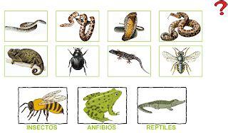 blog de ana bastida 2 186 insectos anfibios y reptiles