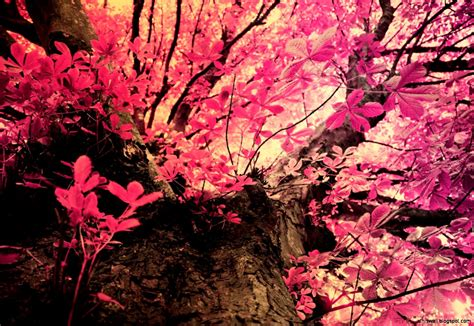 pink camo background pink camo wallpaper this wallpapers