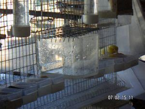 www gabbia it come costruire una gabbia per canarini o costruire una