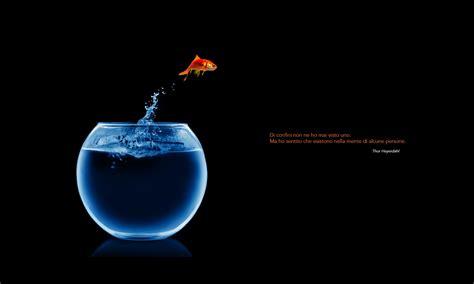 il pesce volante il pesce volante