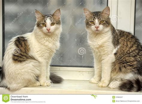 On The Windowsill Two Cats On The Windowsill Royalty Free Stock Photography
