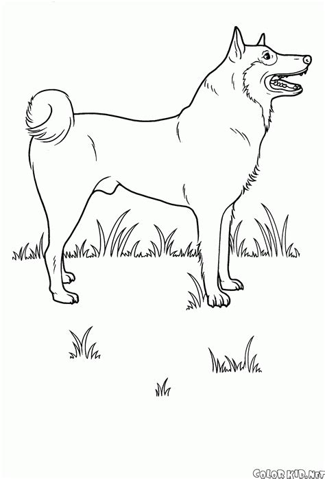 coloring page dog on the meadow