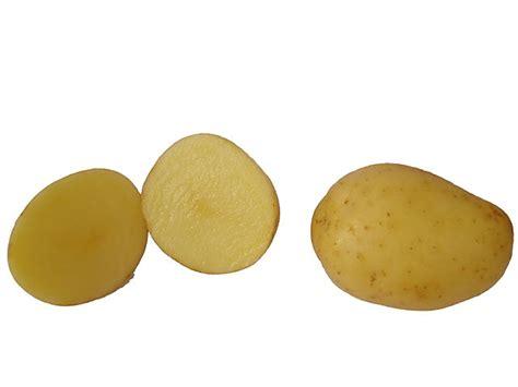 wann sind kartoffeln giftig wann sind kartoffeln reif phlora de