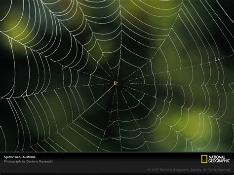 Spider Web weekend diversion spider webs on drugs starts with a