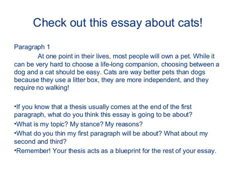 My Favorite Pet Essay by Cat Essay