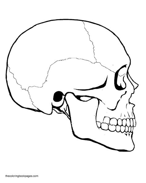 Coloring Pages Skulls 516244