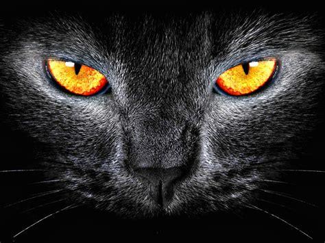 cat eyes wallpaper hd cat eyes wallpapers 65 wallpapers wallpapers 4k