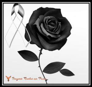 imagenes de rosas negras con frases tristes lazos de luto con una rosa negra para expresar duelo