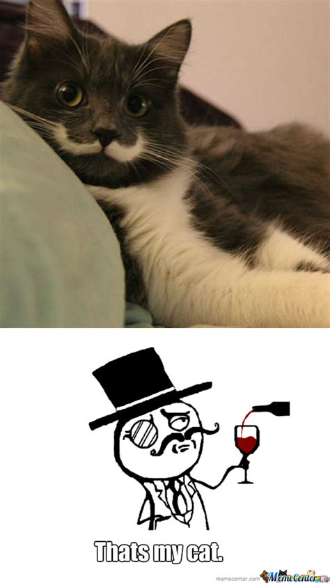 Mustache Cat Meme - image gallery kitten with mustache meme