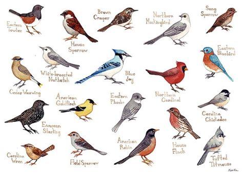 eastern north carolina birds field guide style watercolor