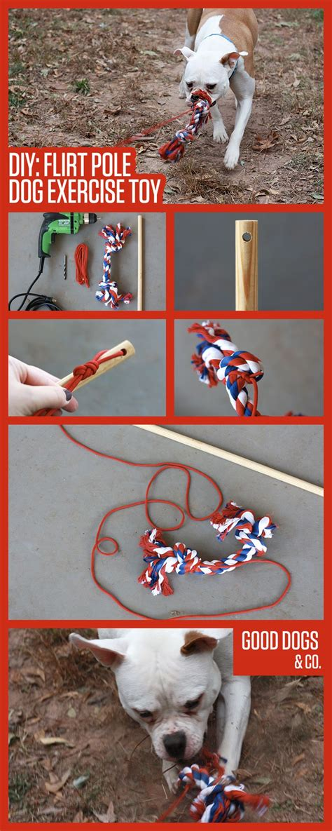 pole for dogs diy flirt pole exercise easy to make and great for dogs with a high prey