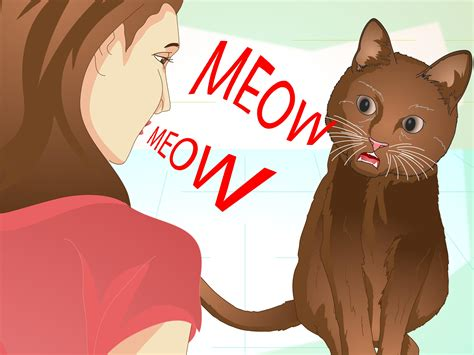 1452138923 how to be a cat how to teach your cat to do tricks 15 steps with pictures