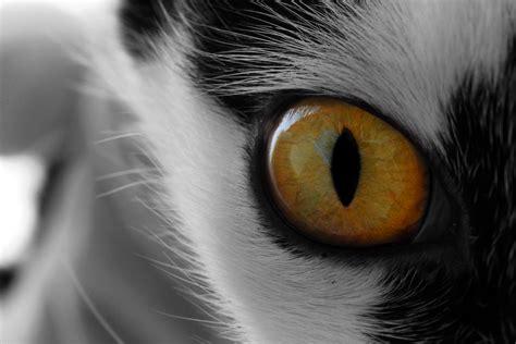 cat eye january 2012 buddyjournal