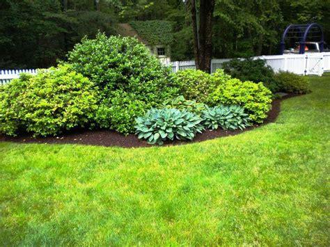 backyard bushes 25 best images about backyard ideas on pinterest dining