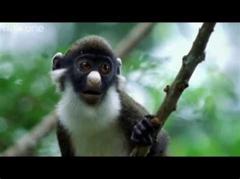 funny animal video clips gods creatures make me laugh