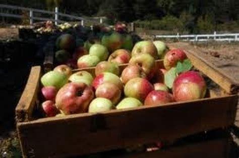 vendita alimenti biologici la vendita dei prodotti biologici cure naturali it