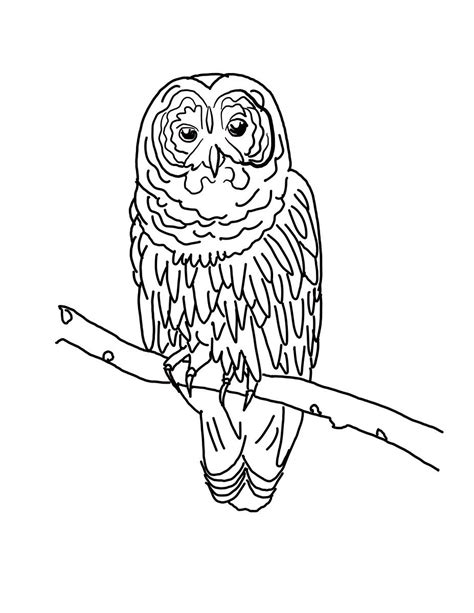 barred owl coloring page barred owl coloring download barred owl coloring