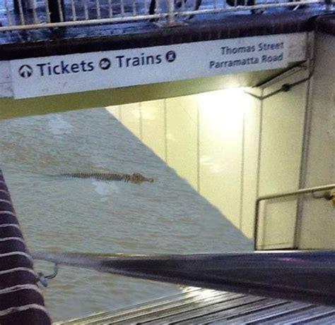 Australia Original 1 Tx Tshirtkaosraglananak Oceanseven g1 foto falsa mostra crocodilo em esta 231 227 o de trem alagada em sydney not 237 cias em planeta bizarro