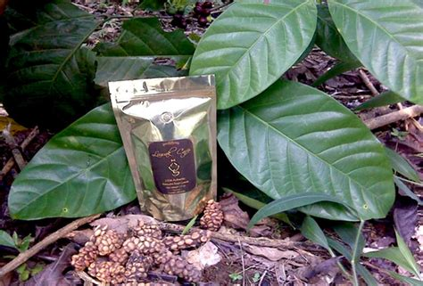 Kaos Kopi Unik Pertama Di Indonesia kopi termahal di dunia ada di indonesia rasakopi