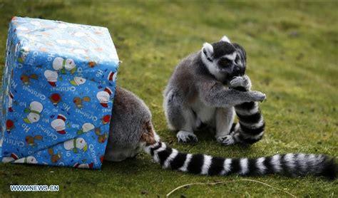 imagenes animales del zoologico animales en el zool 243 gico whipsnade reciben regalos