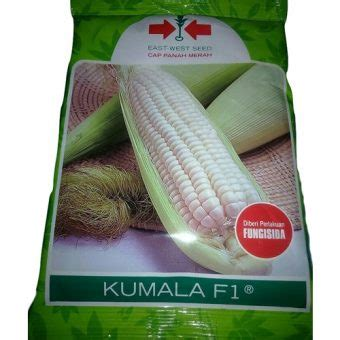 Harga Bibit Jagung Manis 1 Kg jual benih jagung pulut kumala f1 1750 biji murah