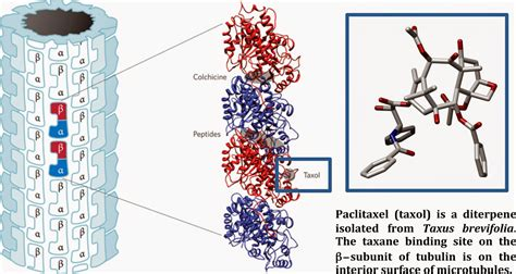 modern steroid science taccalonolides microtubule