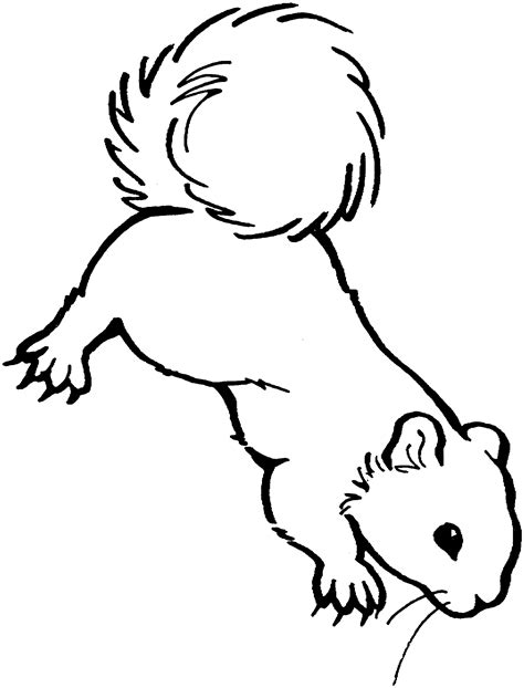 flying squirrel coloring page cliparts co