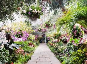new york botanical garden s orchid show sneak peek