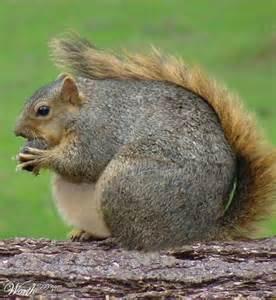 unh squirrels unh squirrels twitter