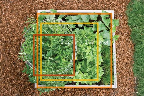 how to grow a vegetable garden for beginners how to grow a vegetable garden how to plant a vegetable